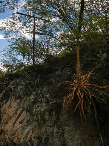 La vegetación subtropical