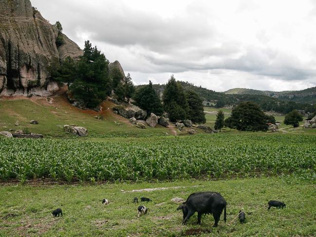 Agricultura y pastoreo